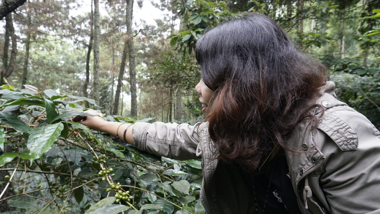 """Piknik Kopi Kedai Jatam di Gunung Puntang mengajak peserta mengenal kopi di """"rumahnya"""" (dok. Sarah/ Tim Lasak)"""